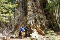 Huge old stump.