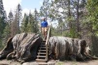 Atop the Mark Twain Stump.