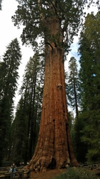 Another view of the General Sherman Tree.