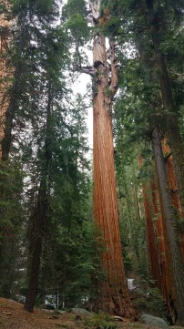 Some of the sequoias. You can stare for a while.
